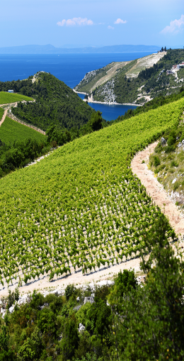 Dégustation et visite d'un vignoble