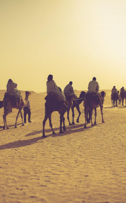 Promenade à dos de dromadaire dans le Sahara