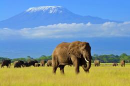 Safaris au lever du soleil au parc du Masai Mara