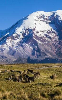 Dîner dans une communauté près de Chimborazo
