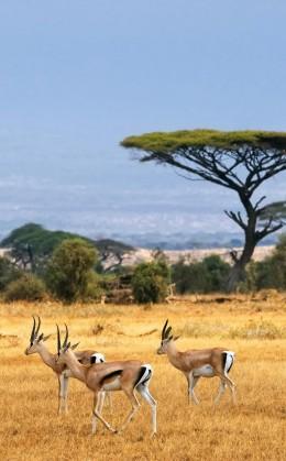 Découverte des réserves nationales de Masai Mara, d'Amboseli et de Tsavo   Merveilles du Kenya