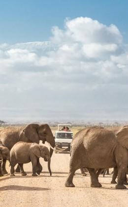 Circuit en minibus à toit ouvrant pour capturer chaque instant   Merveilles du Kenya