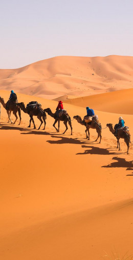 Balade à dos de dromadaire dans le Sahara