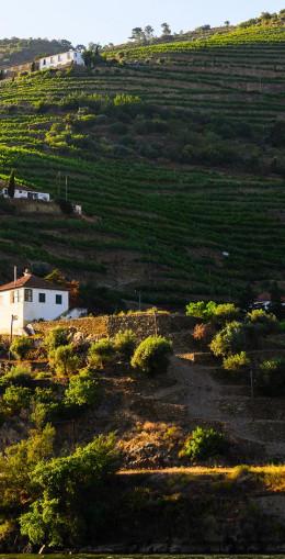 Domaine viticole familial historique, la Quinta de Sant'ana