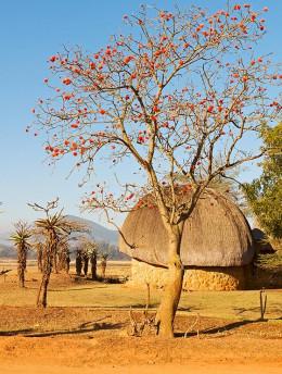 Découverte du royaume indépendant du Swaziland