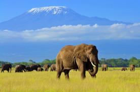 Kenya: Safaris et Plages