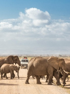 Merveilles du Kenya