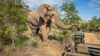 Faire un safari