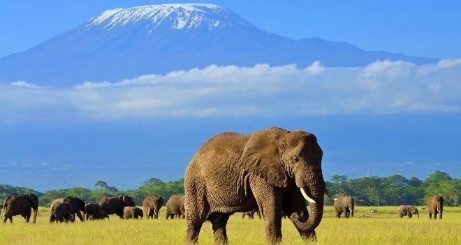 Passer un moment fort avec les éléphants d'Afrique