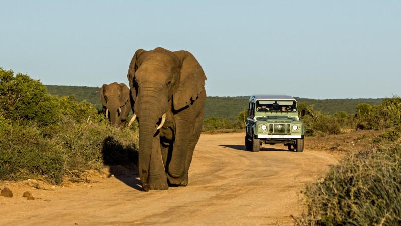 Découvrez l'Afrique du Sud et les safaris